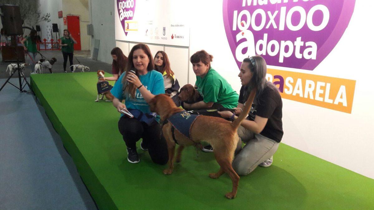 ALBA en el 100×100 Mascotas 2017