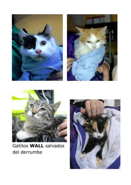 Katzen vor dem sicheren Tod gerettet!