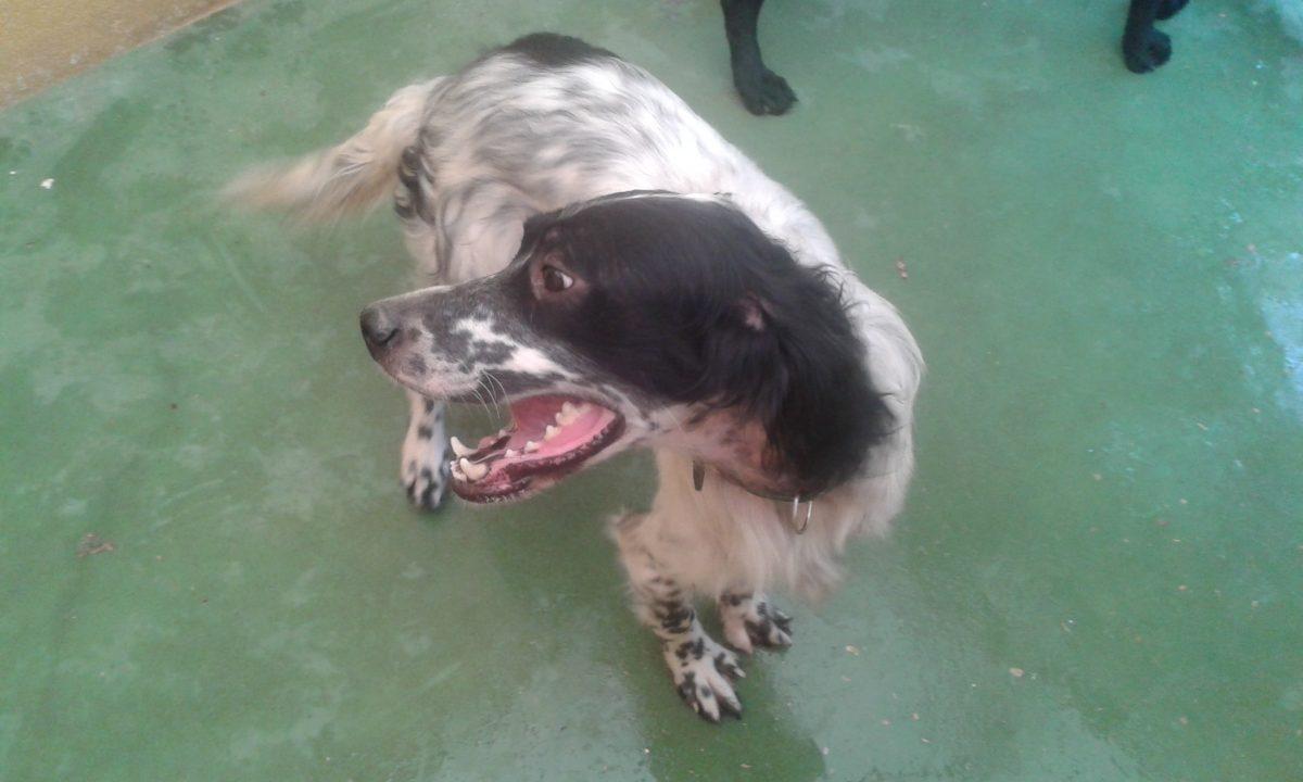 La FAPAM incauta 17 perros en Collado Villalba