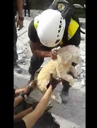Los animales también han sufrido el terremoto de Ecuador