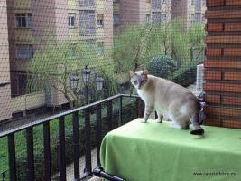 Gatos, Ventanas y Terrazas – ¡SOLUCIONES!