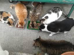 gatos6