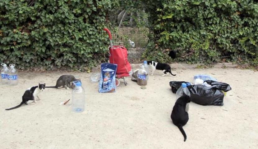 Homenaje a los cuidadores de las colonias felinas