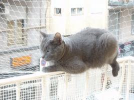 gatos_ventanas_soluciones_2