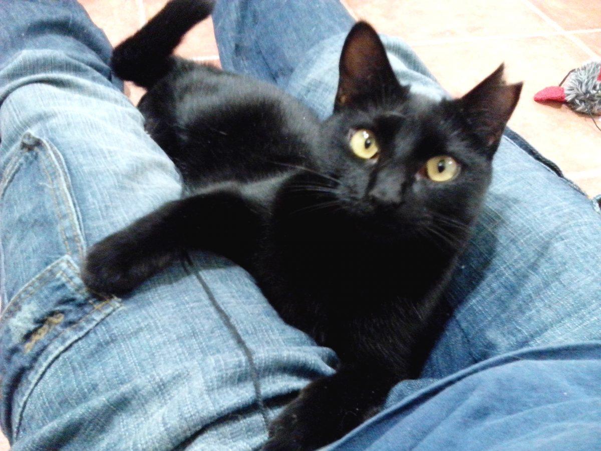 ¿Gato asilvestrado o tímido?