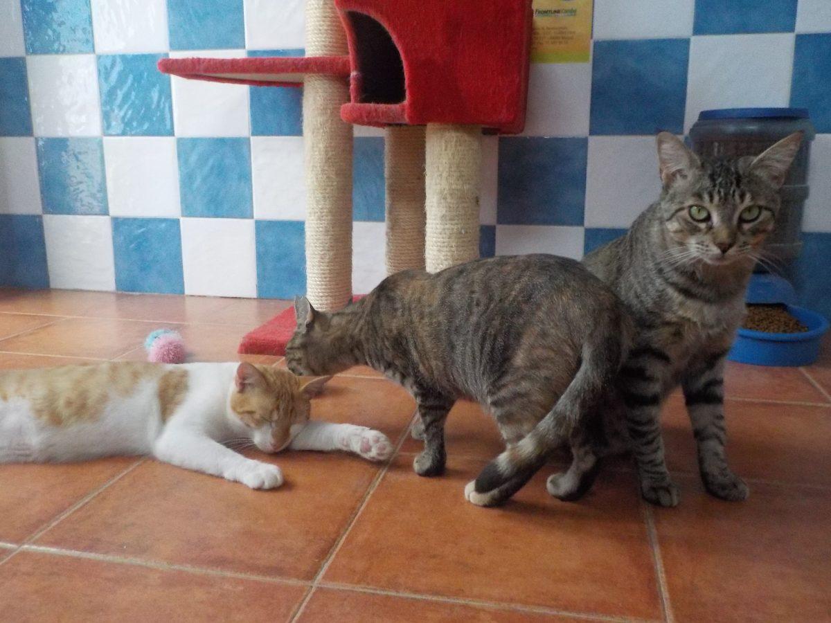 Comunicado de los gatos de ALBA