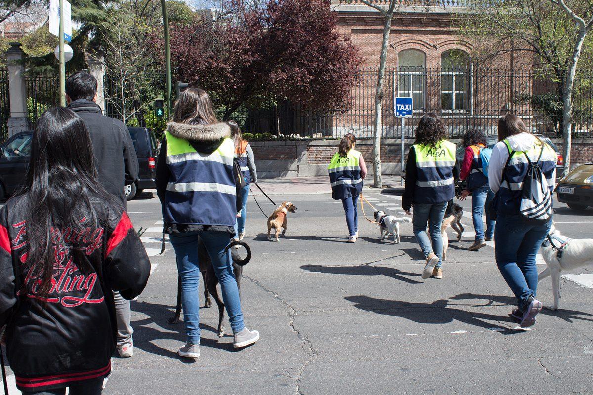 Excursión de los perros de ALBA a El Retiro