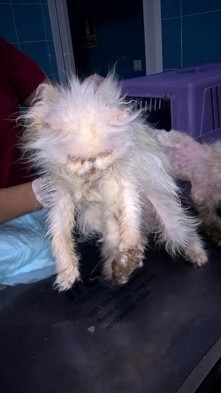 ALBA participa en el rescate de 25 gatos exóticos maltratados