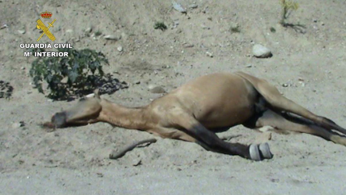 Detenido por maltratar a más de 30 caballos
