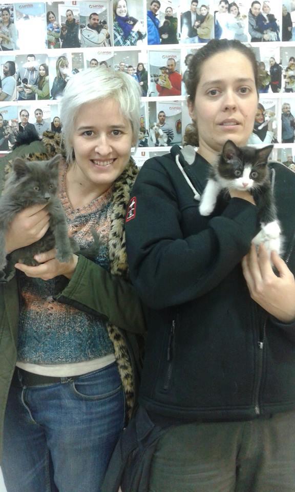 Las tiendas Kiwoko ya no venderán perros ni gatos y fomentarán la adopción
