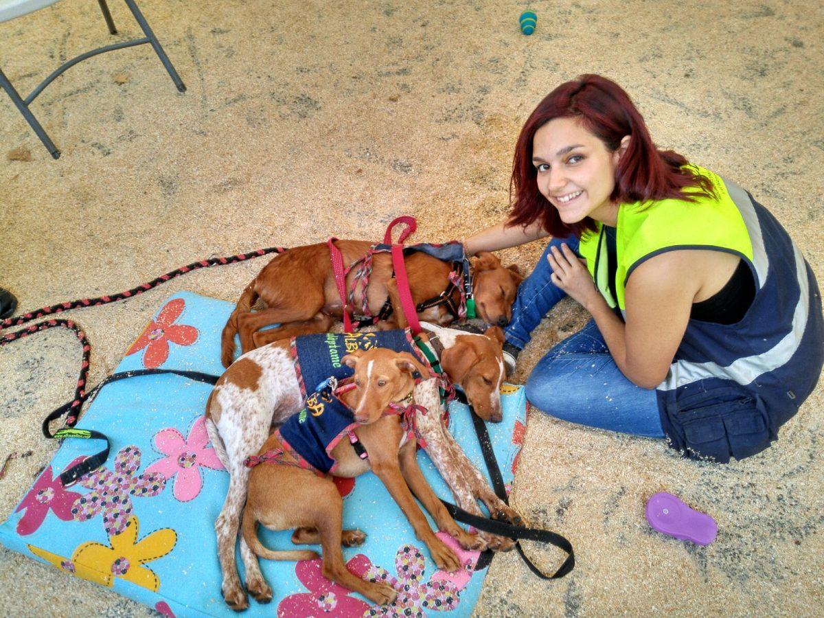 Éxito en el XI Salón para la adopción de animales de compañía