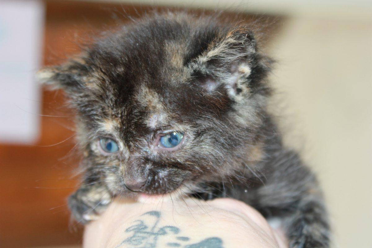Bebés gatunos buscan hogar