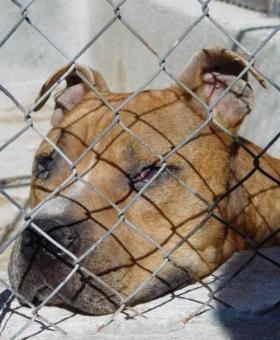 Drei Personen im Gefängnis und 317 beschlagnahmte Hunde in der