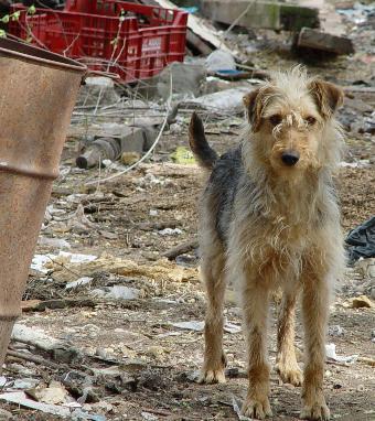 Befreiung von 10 Hunden von einem Gelände in Fuente el Saz