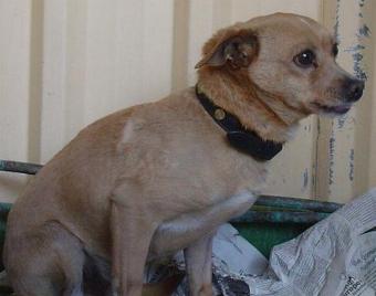 Die Madrider Regierung verhängt Geldstrafen wegen Aussetzen von Hunden, die von der ALBA aufgelesen wurden