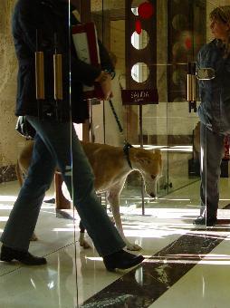 Übergabe von 50.000 Unterschriften gegen die Jagd mit Galgos im spanischen Umweltministerium