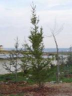 Das ALBA-Tierheim liegt nun im Wald
