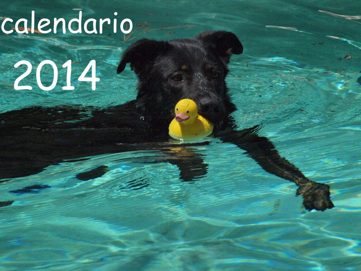 Hurra – der ALBA-Kalender 2014 ist da!