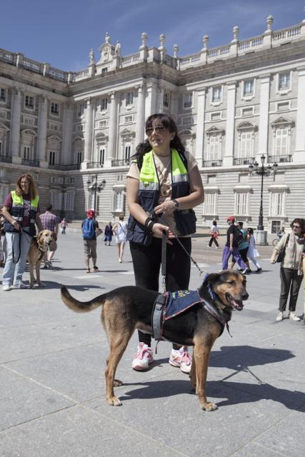 Die ALBA-Hunde machen einen Ausflug nach Madrid