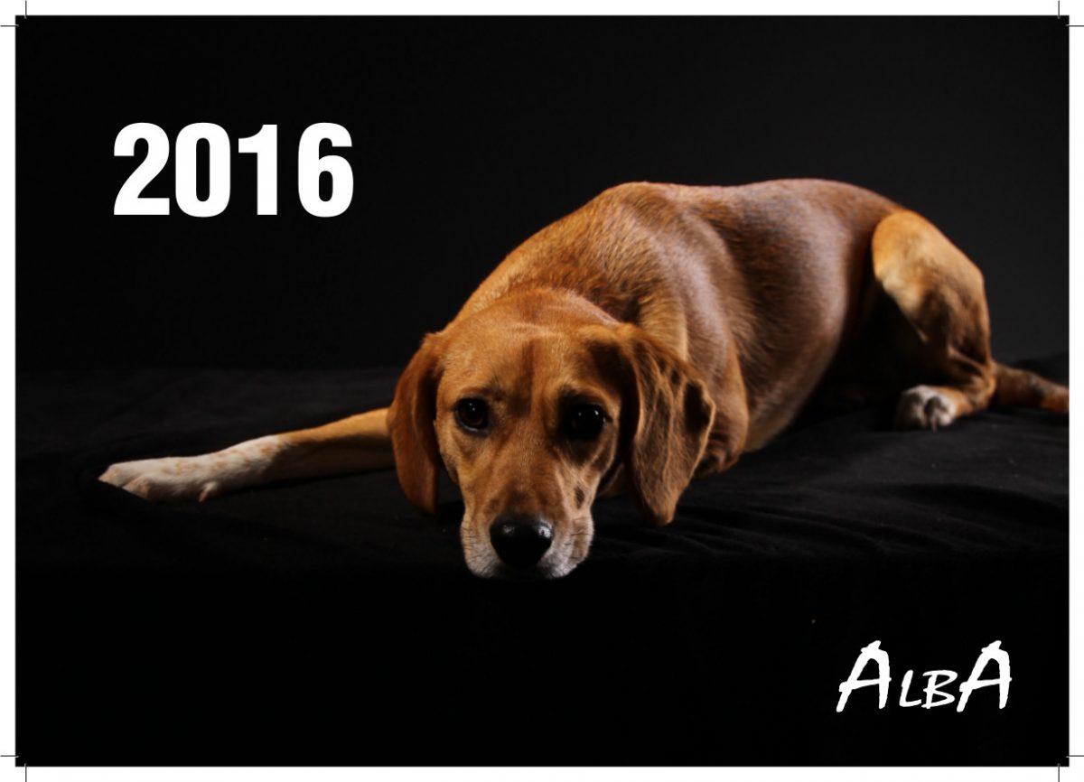 Hurra – der ALBA-Kalender 2016 ist da!