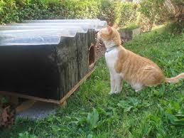 El Ayuntamiento de Madrid pone en marcha el carné de colaborador de colonias felinas