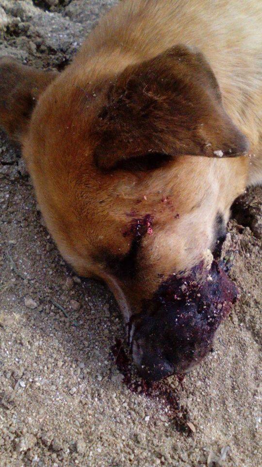 KAS asesinado por un cazador