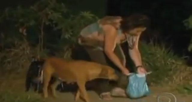 LILICA, la perra solidaria