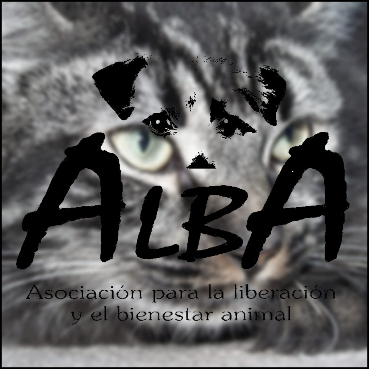 Balance 2013: 1944 animales ayudados
