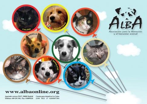 Ya están disponibles el calendario y la lotería de ALBA, ¡este es tu número 75284!