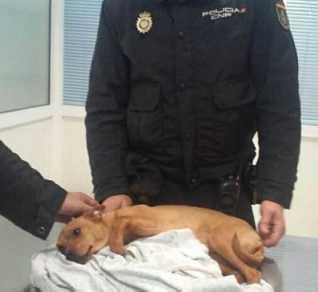 Agentes de la Policía Nacional arrestan a un maltratador y se hacen cargo del perro