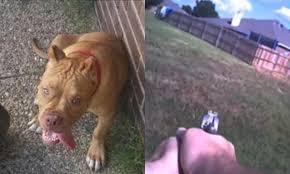 Un policía asesina a un Pitbull en Texas