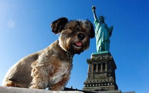 Nueva York crea un registro de maltratadores de animales