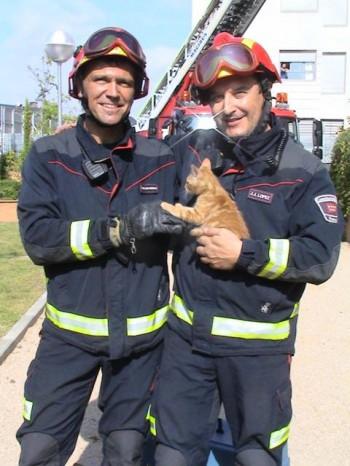 ALBA participa en el rescate de una gata que llevaba carios días sin comer ni beber